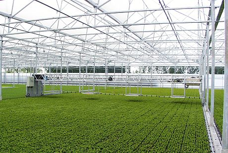 Application in greenhouse